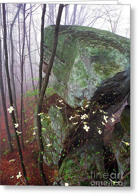 Misty Woods Greeting Card by Thomas R Fletcher