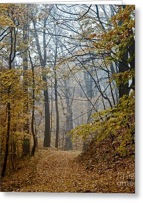 Misty Yellow Greeting Card by Barbara McMahon