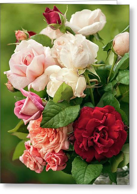Mixed Bouquet Of Roses (rosa Hybrid) Greeting Card by Maria Mosolova