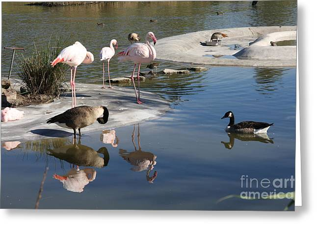 Mixed Company Greeting Card by Christiane Schulze Art And Photography