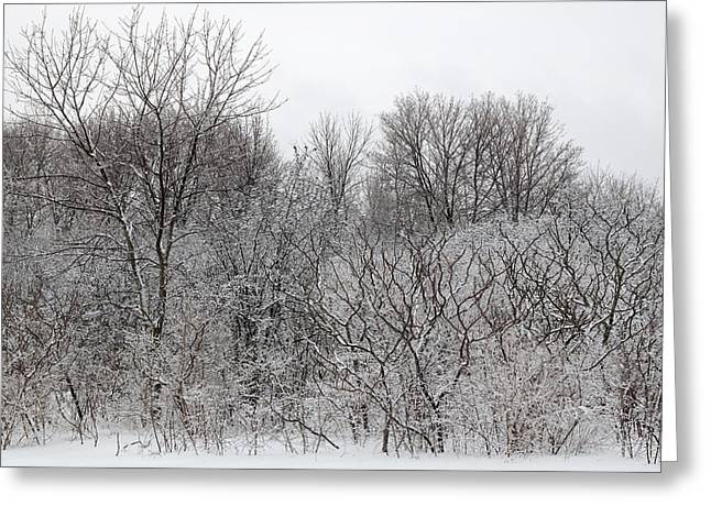 Mixed Forest In Winter. Greeting Card by Rob Huntley