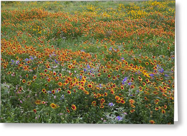 Mixed Wildflowers Blowing Greeting Card