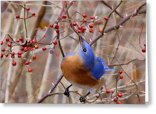 Mmm Berries By James Figielski Greeting Card by Paulinskill River Photography
