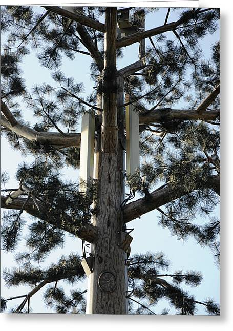 Mobile Phone Mast Disguised As Tree Greeting Card by Public Health England