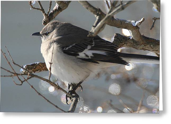 Mockingbird In Winter Greeting Card
