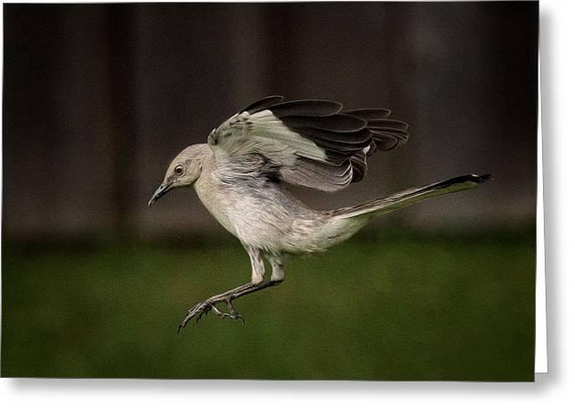 Mockingbird No. 2 Greeting Card