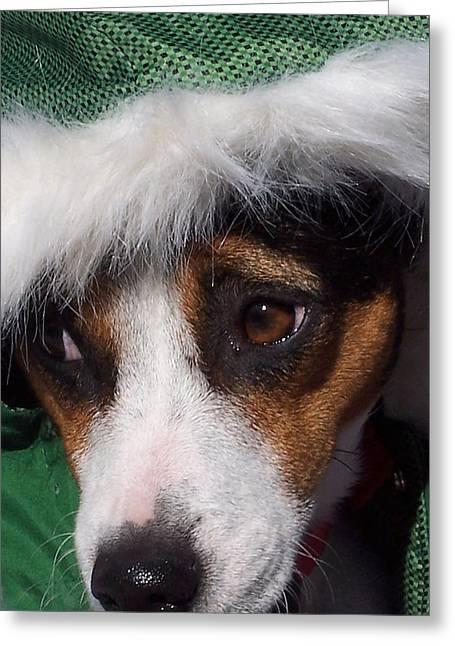 Mojo's New Holiday Coat Greeting Card by Claudia Goodell