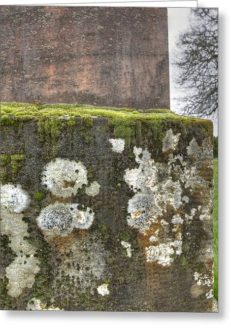 Moldy Above And Below Greeting Card by Jean Noren