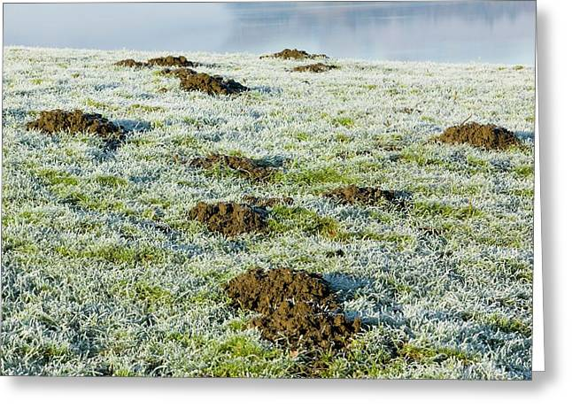 Molehills In A Frosty Field Greeting Card by Ashley Cooper