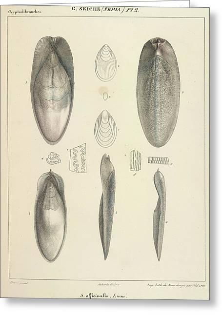 Molluscs Greeting Card
