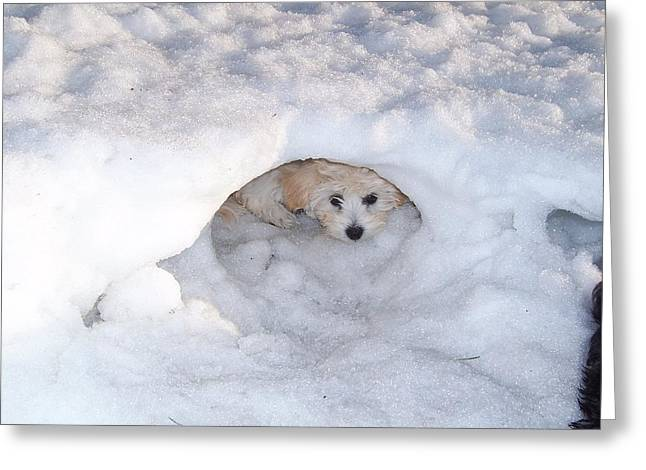 Molly Hidding In Her Snow Cave Greeting Card