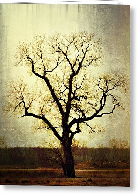 Molted Tree Greeting Card by Marty Koch