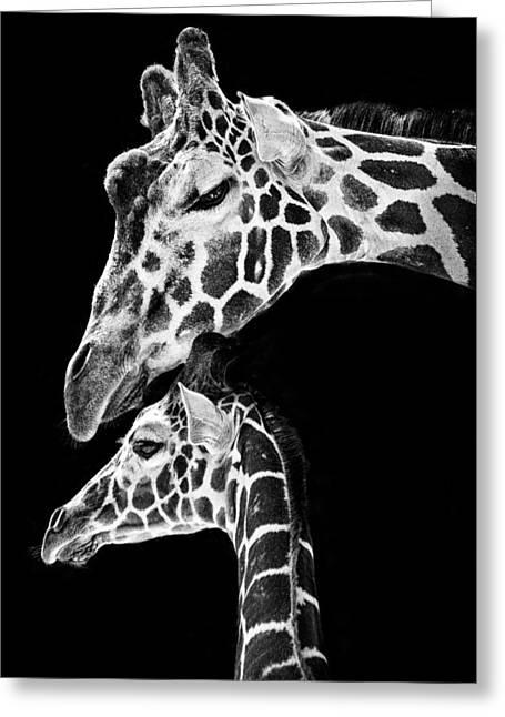 Mom And Baby Giraffe  Greeting Card