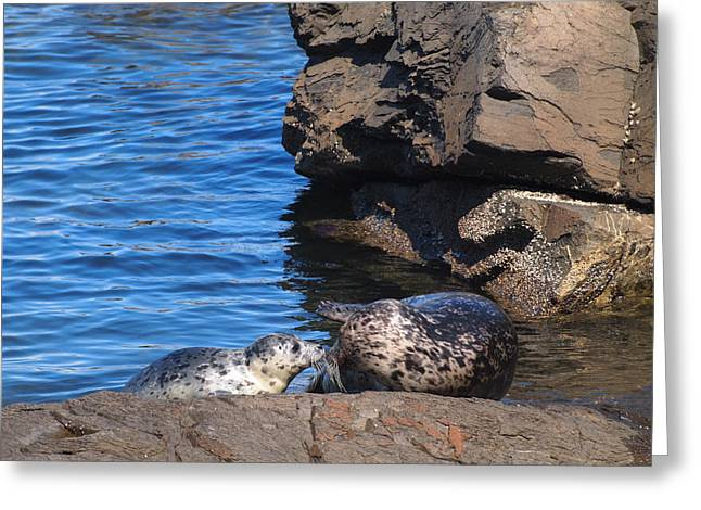 Mom And Baby Seal Greeting Card by Frieda Cron