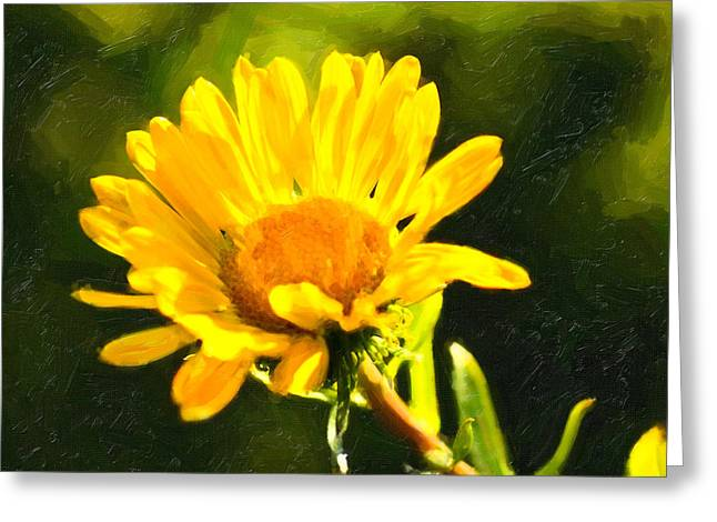 Moment In The Sun - Golden Flower - Northern California Greeting Card