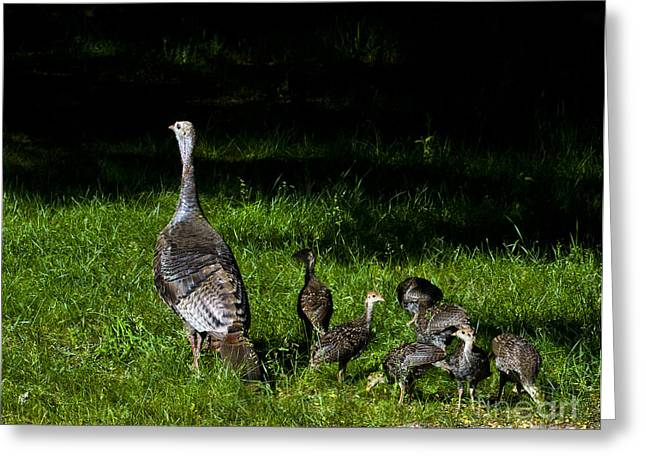 Mom..he Is Looking At Us Again Greeting Card by Timothy J Berndt