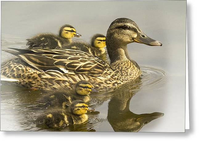 Momma And Babies Greeting Card by Sonya Lang