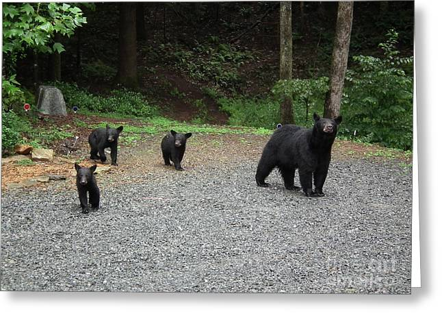 Momma And Three Bears Greeting Card by Jan Dappen