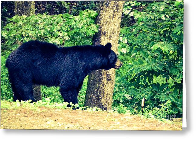 Greeting Card featuring the photograph Momma Bear by Jan Dappen