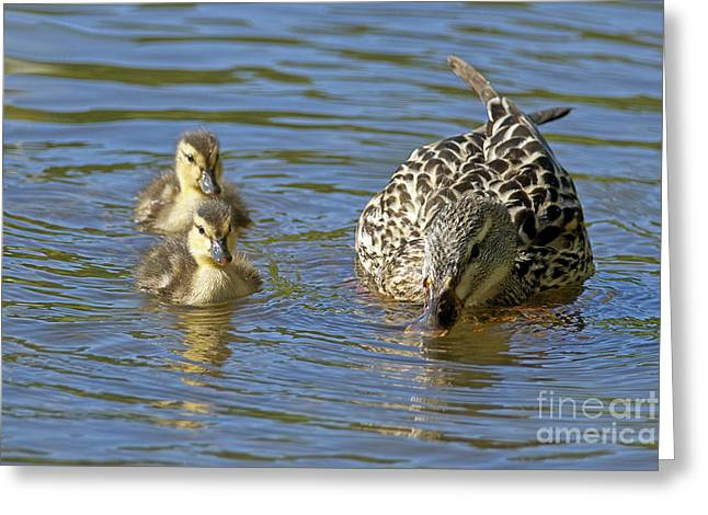Momma Mallard And Her Ducklings Greeting Card by Sharon Talson