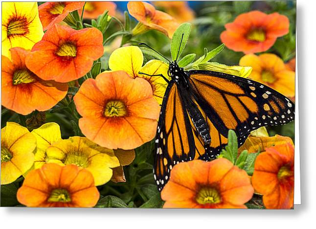 Monarch Among The Flowers Greeting Card by Garry Gay