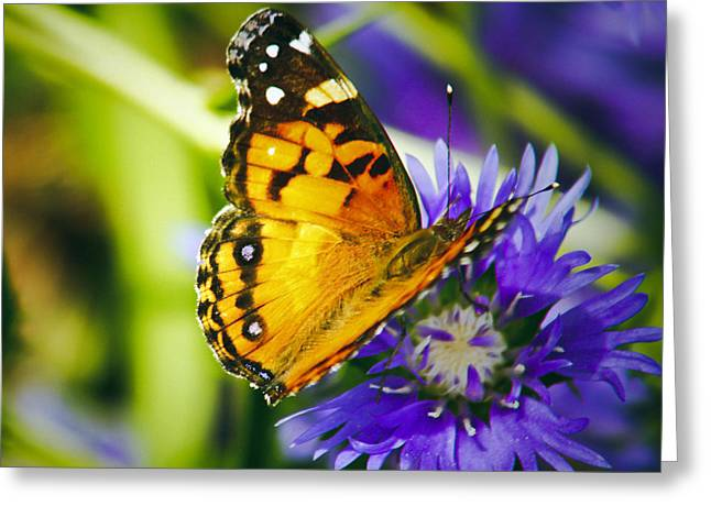 Monarch And Flower Greeting Card