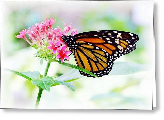 Monarch Beauty Greeting Card by Jim  Darnall