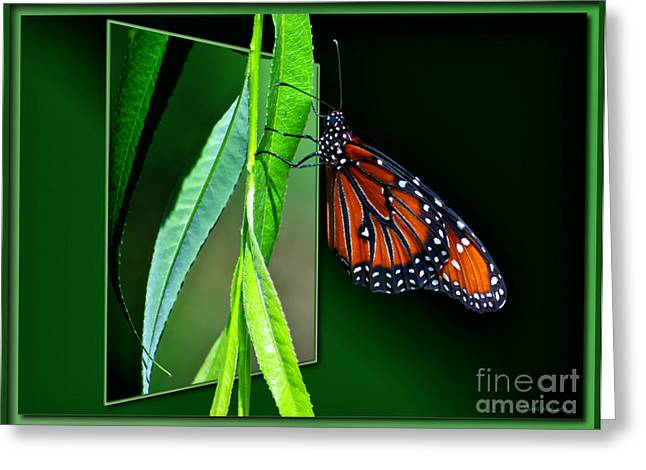 Monarch Butterfly 04 Greeting Card by Thomas Woolworth