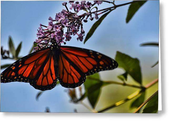 Monarch Butterfly #1 Greeting Card