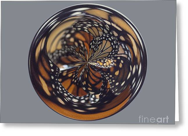 Monarch Butterfly Abstract Greeting Card by Darleen Stry