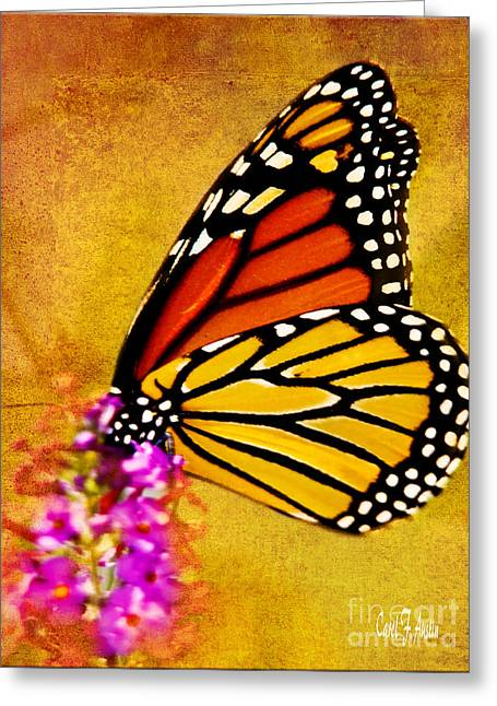 Monarch Butterfly Color Splash Sunset Greeting Card