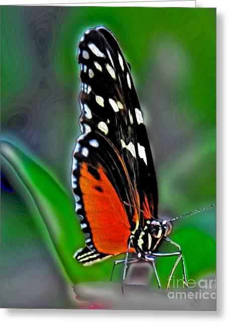 Monarch Butterfly Greeting Card by Dawn Gari
