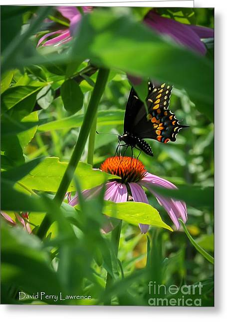 Greeting Card featuring the photograph Monarch Butterfly Deep In The Jungle by David Perry Lawrence