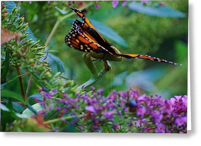 Monarch Butterfly Down Greeting Card by Joy Bradley