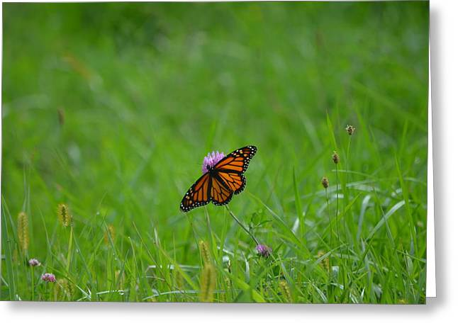 Greeting Card featuring the photograph Monarch Butterfly by James Petersen