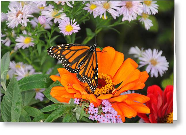 Monarch Butterfly Greeting Card by Katie Wing Vigil