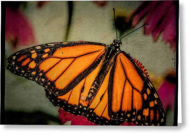 Monarch Butterfly Greeting Card by Linda Karlin