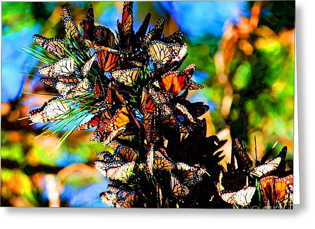 Monarch Butterfly Migration Greeting Card by Tap On Photo