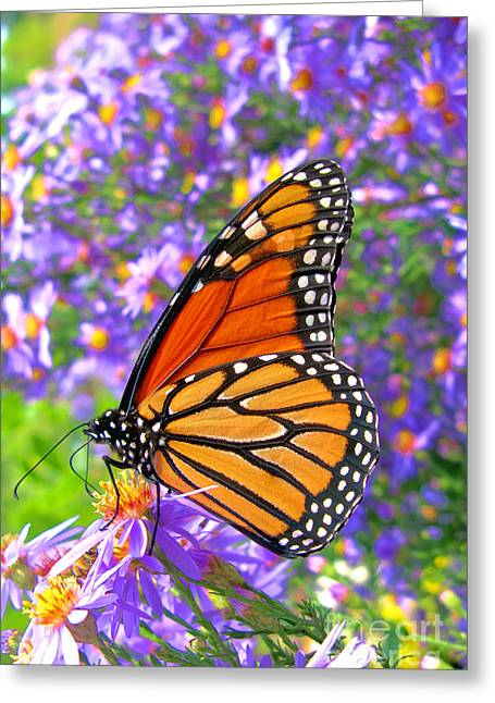 Monarch Butterfly Greeting Card by Olivier Le Queinec