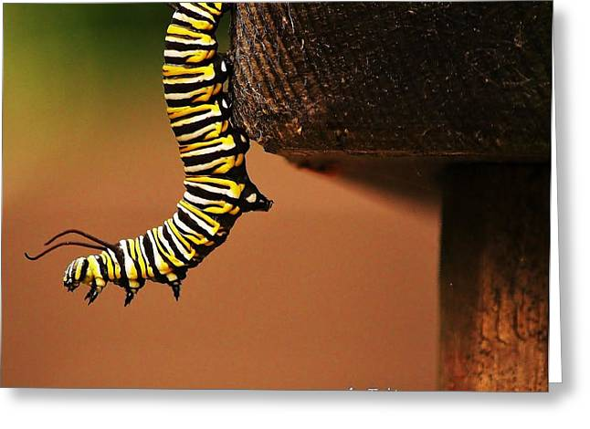 Monarch Caterpiller Greeting Card