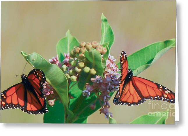 Greeting Card featuring the photograph Monarch Gathering by Kerri Farley