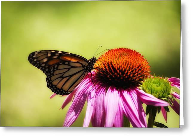 Monarch Glow Greeting Card by Shelly Gunderson