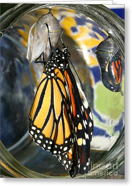 Greeting Card featuring the photograph Monarch In A Jar by Steve Augustin