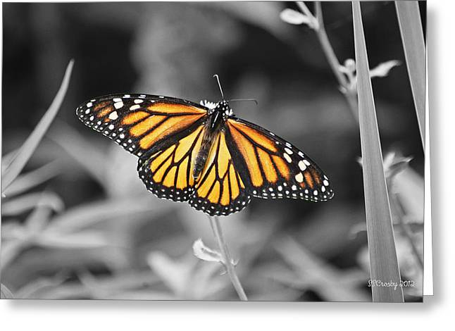 Monarch In Its Glory Greeting Card