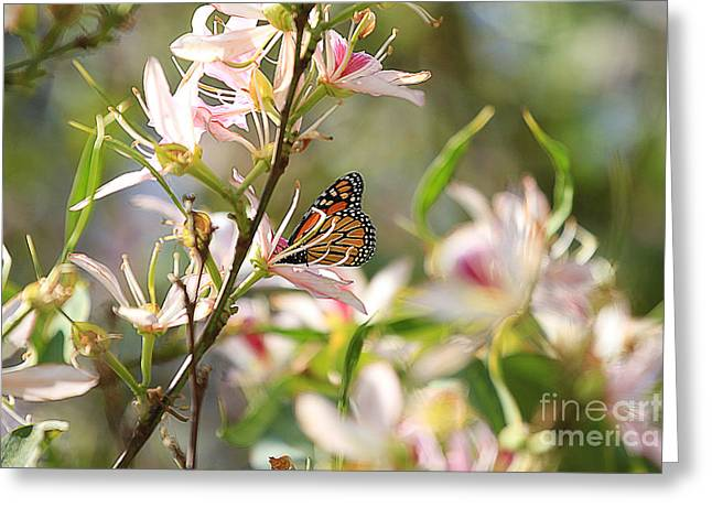 Monarch Greeting Card by Kevin Ashley