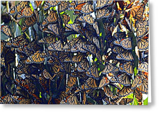 Monarch Mosaic Greeting Card