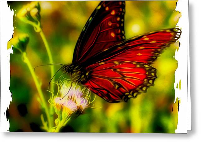 Monarch Of The Day Greeting Card