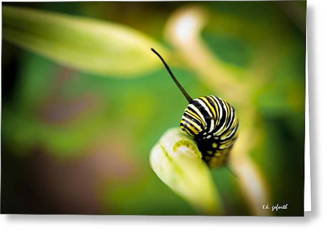 Monarch Offspring Greeting Card by TK Goforth