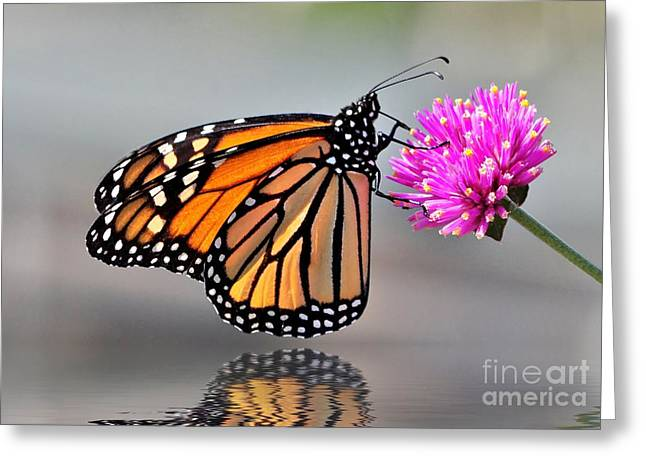 Greeting Card featuring the photograph Monarch On A Pink Flower by Kathy Baccari