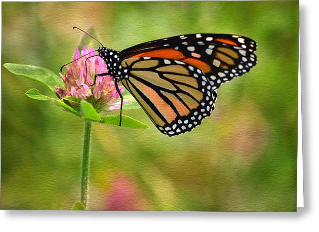 Monarch On Clover Greeting Card